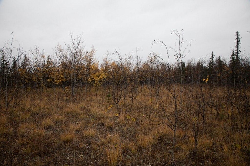 Life-Off-Grid_Yukon_04